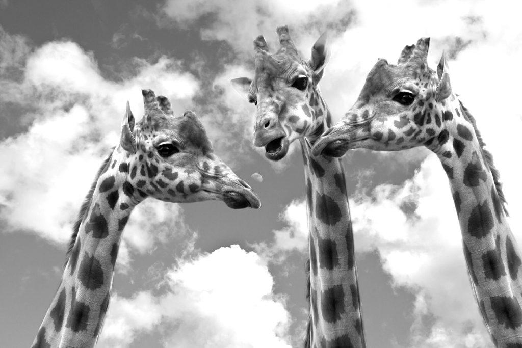 Debat er ikke kun for girafferne. Du er velkommen til at bruge mikrofonen her. Jeg lytter til alle beskeder. Husk at give mig besked, hvis du ønsker, at jeg laver et debatindlæg ud af din kommentar.